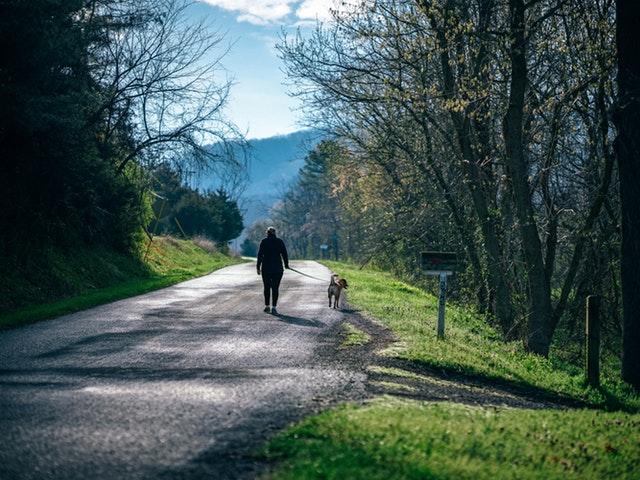 Människa med hund på promenad